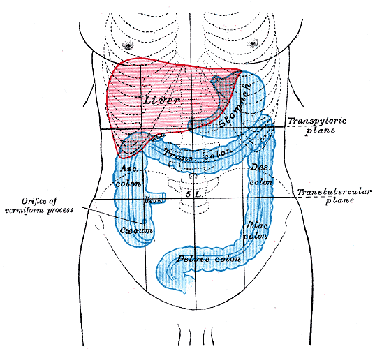 Colon Rectum Anatomy Image001 ( Intestine Diseases & Surgery )